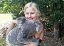 Koalaen er sterkt truet i Australia